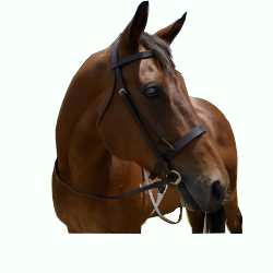 Plain Cavesson Snaffle Bridle
