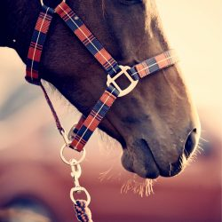 Halters, Leads & Fly Masks