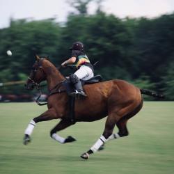 Polo & Polocrosse